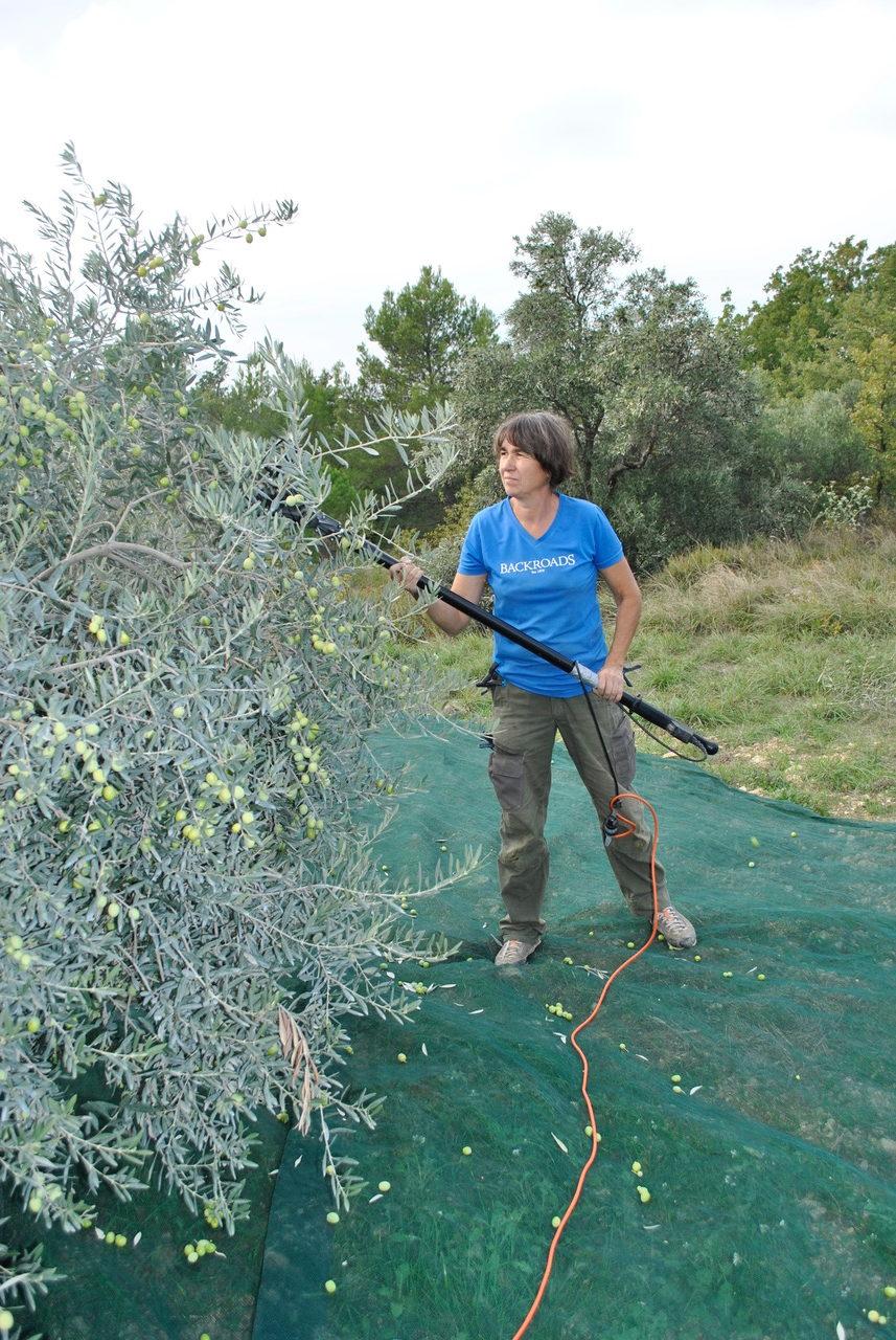 La-Paysanne-recolte-olives-e1551135420669